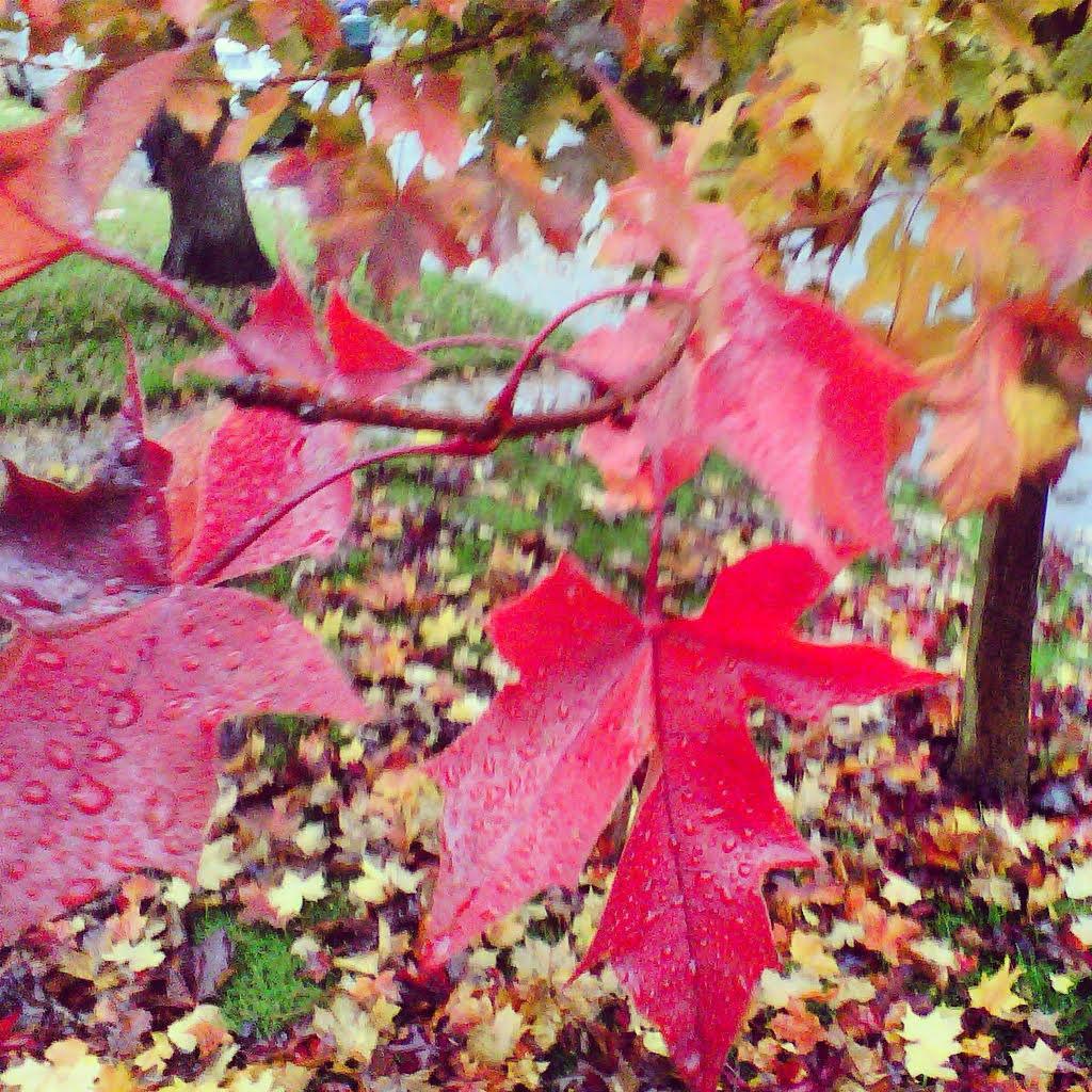 autumnpicMM